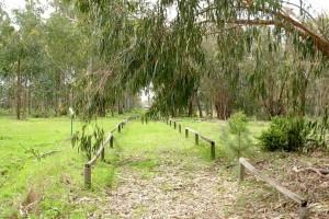 La Fundación Cepsa incluye el Arboreto de El Villar en su colaboración con la Junta.