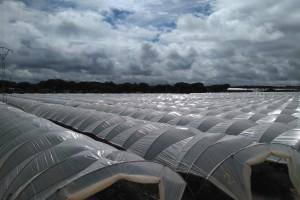 CHG anuncia el cierre de 170 pozos en el entorno de Doñana tras la concesión para riego de 318 hectáreas de El Fresno.