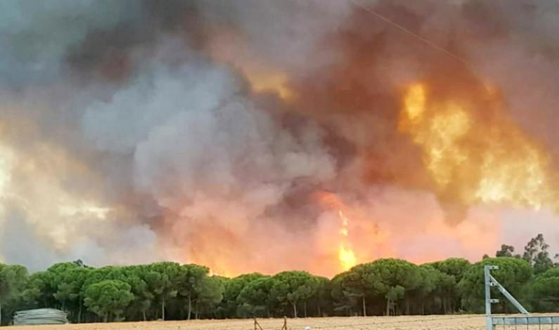 La Junta activa el nivel 1 del Plan Infoca por un incendio forestal en Moguer.