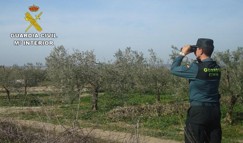 Detenido en Bonares un varón al que se le imputan los daños ocasionados en dos fincas agrícolas.
