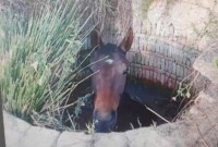 Rescatan un caballo que cayó a un pozo de Bonares