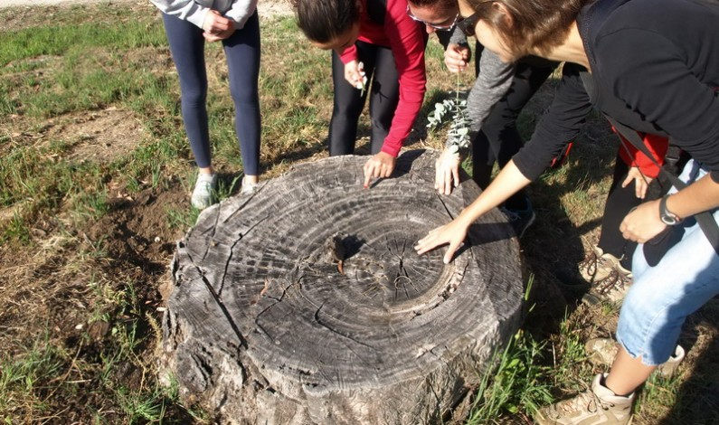 El domingo senderismo familiar por el Arboreto del Villar.