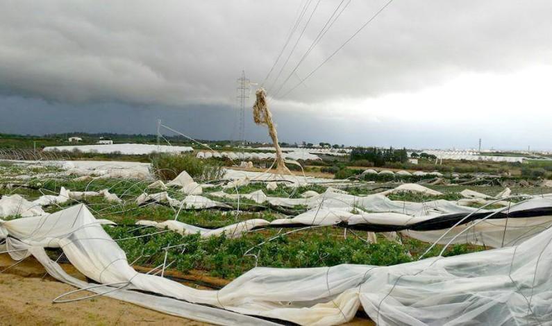 Asegurar las producciones se hace imprescindible en la agricultura.