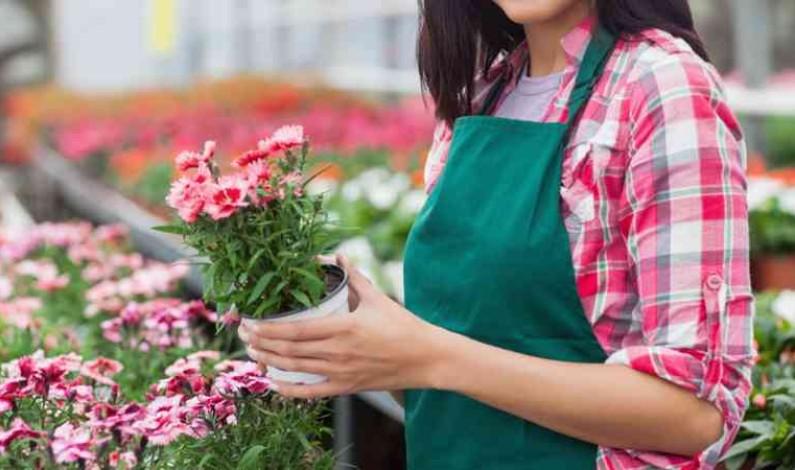 El Instituto de Bonares amplía su oferta con un Ciclo Formativo de Formación Profesional Básica de Agrojardinería y Composiciones Florales.