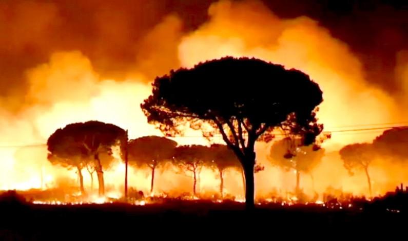 El incendio de Moguer entra en el Espacio Natural de Doñana.