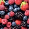 La superficie plantada de frutos rojos aumenta un 11% para esta campaña.