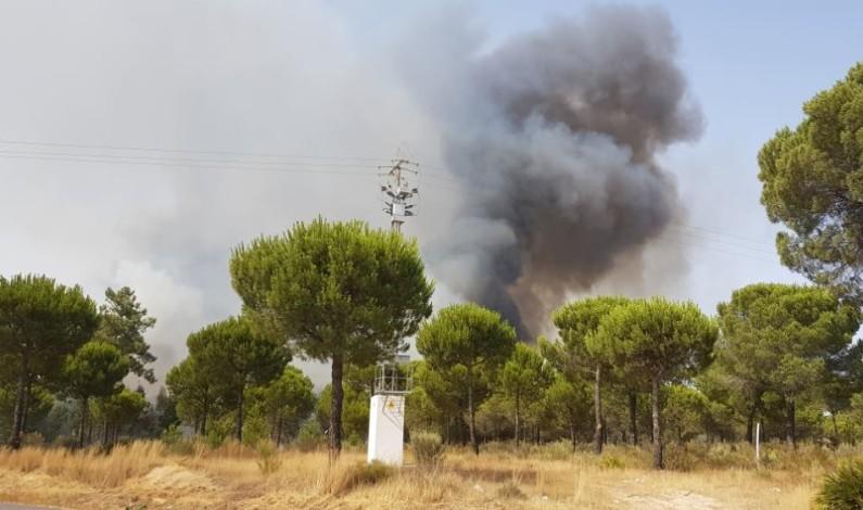 Declarado un incendio forestal en Moguer.