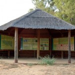 Actuaciones de conservación en el Arboreto del Villar de Bonares.