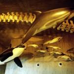 Visita al Museo del Mundo Marino, Doñana.
