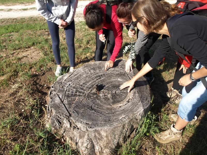 senderismo arboreto del villar, Bonares