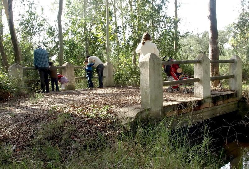 senderismo Arboreto del Villar, Bonares Huelva.