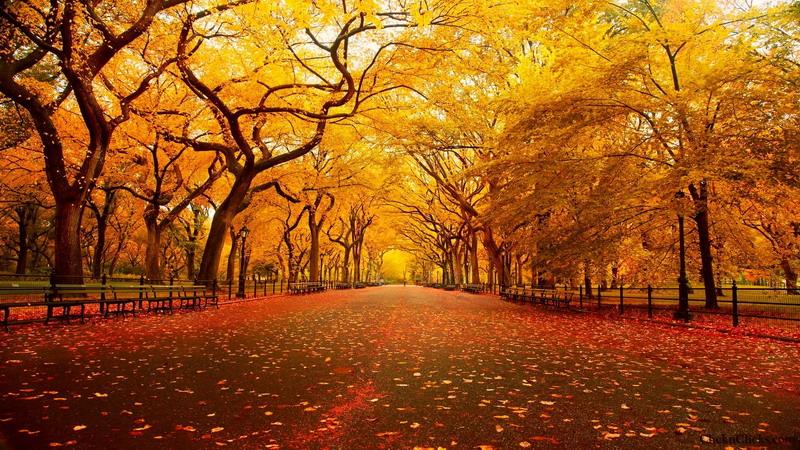 el otoño en Bonares