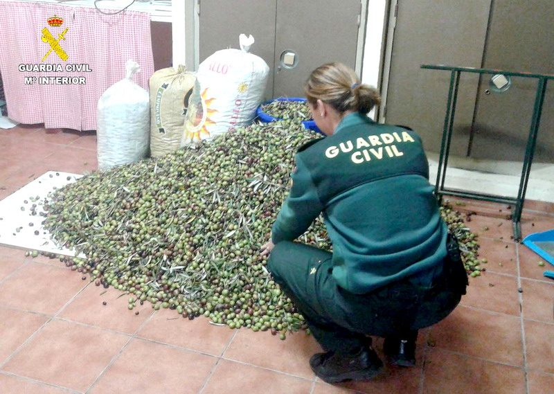 robo de aceitunas en Bonares