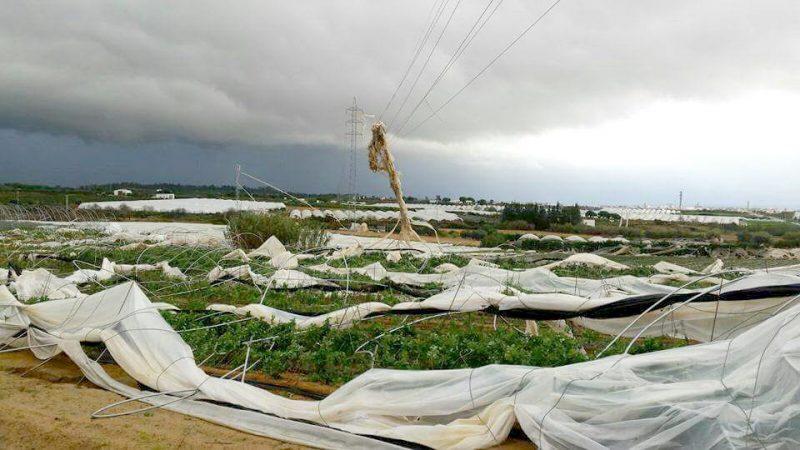 palos tornado