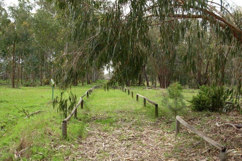 arboreto del villar de bonares