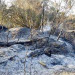 Se da por controlado el incendio forestal de Bonares.