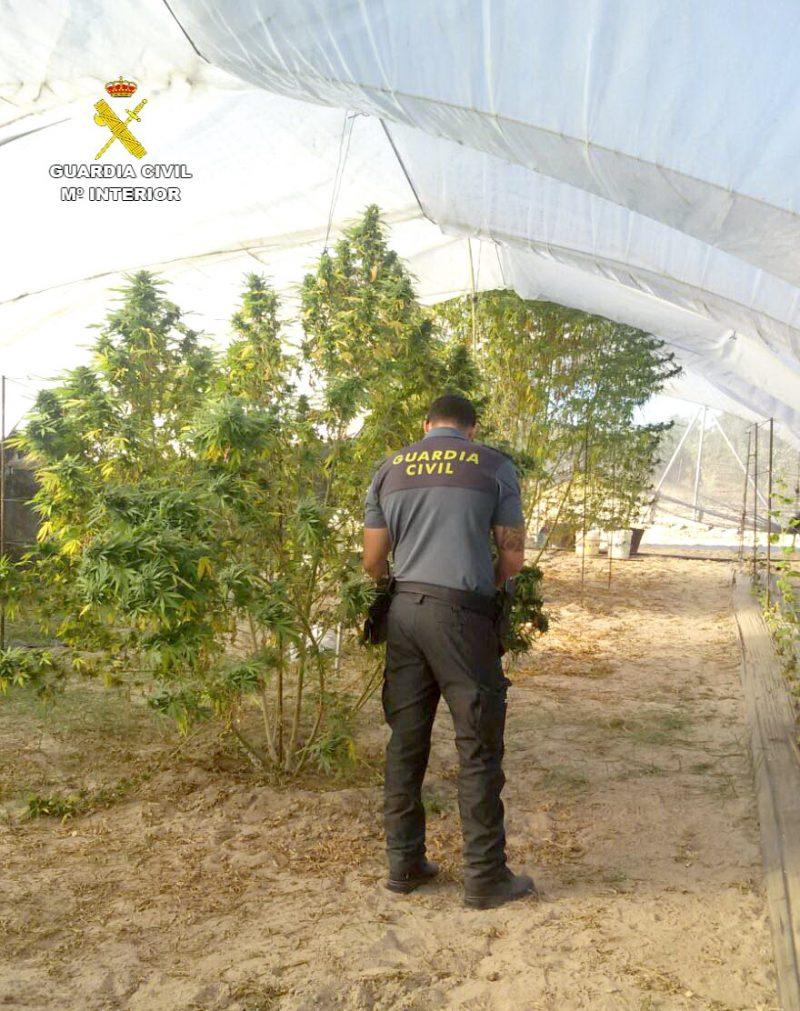 marihuana invernadero