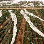 El PP se reunirá con agricultores para evaluar los daños del temporal.