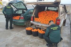 Recuperados 600 kg. de naranjas y 200 kg. de mandarinas hurtadas en tres fincas de la provincia.