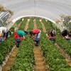 Trabajo agricola