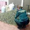 Sorprendidos por la Guardia Civil cuando robaban aceitunas en Bonares.