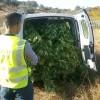 Operación contra el cultivo y venta de marihuana en varias localidades de la provincia.
