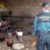 Recuperadas 33 gallinas que habían sido robadas en dos fincas de Bonares