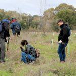 Reforestación de la Universidad de Huelva en el Arboreto del Villar, Bonares.
