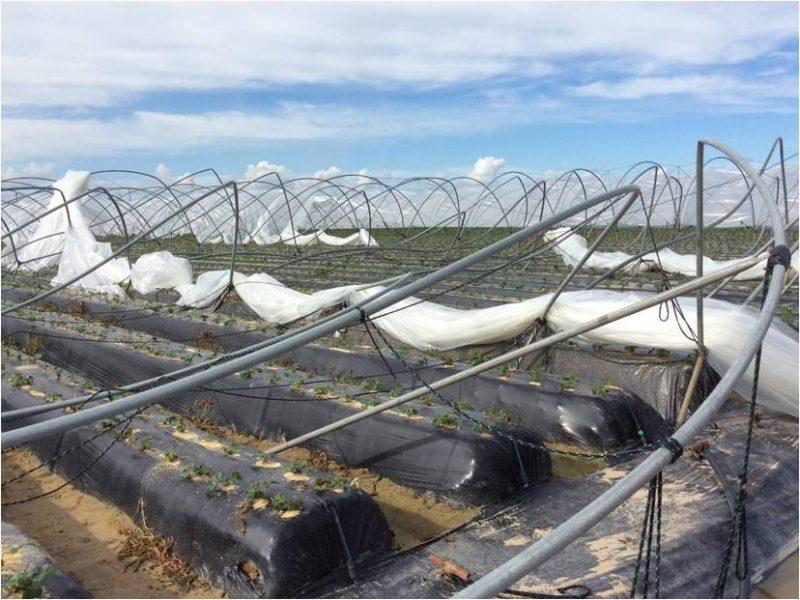 tornado palos de la frontera huelva