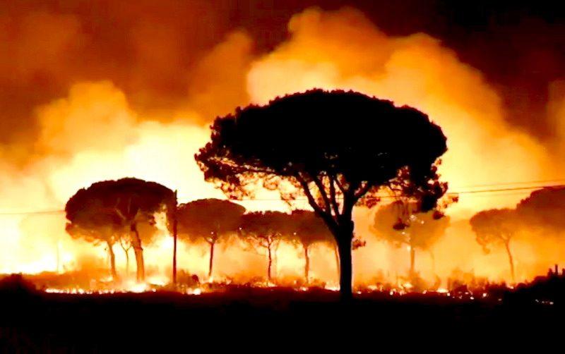 incendio forestal en mazagon