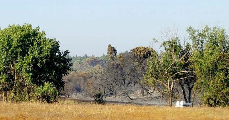 incendio forestal de Bonares
