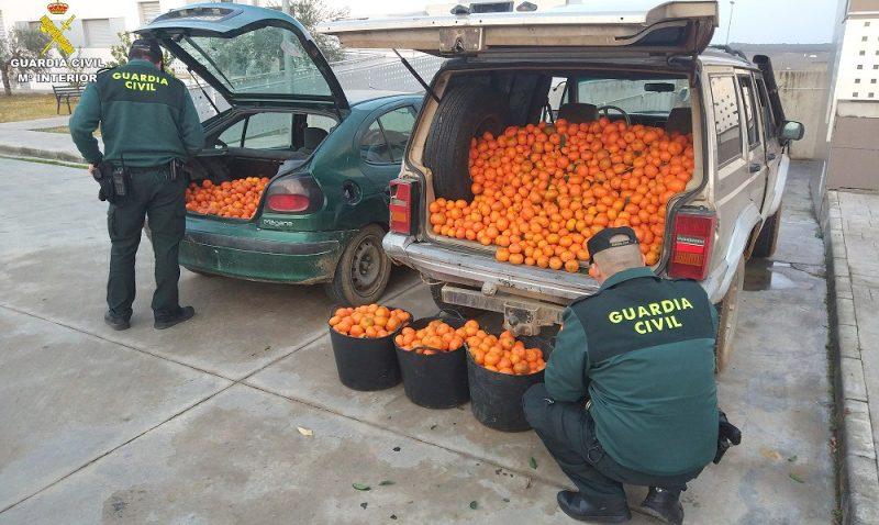 robos agricolas